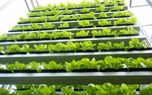 sky-greens-singapore-worlds-first-vertical-farm-2